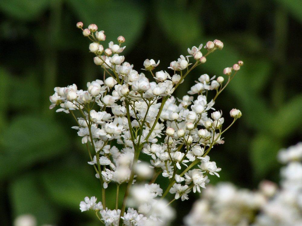 Flowers003.JPG