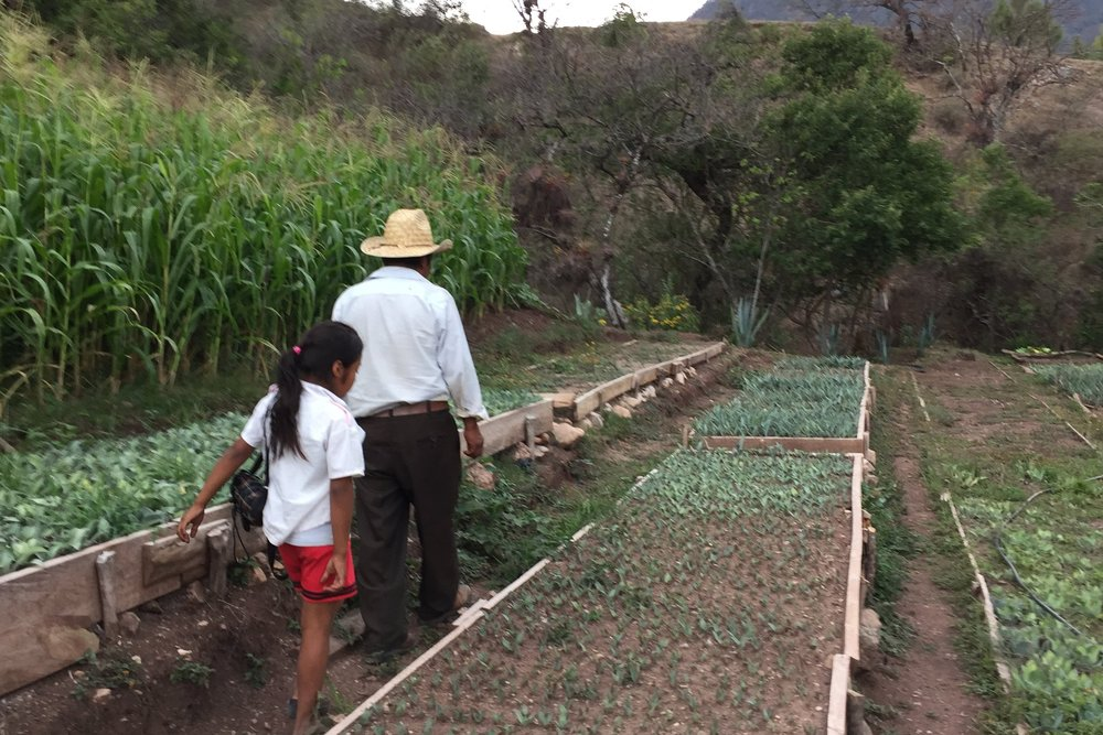 Almacigos en la mixteca