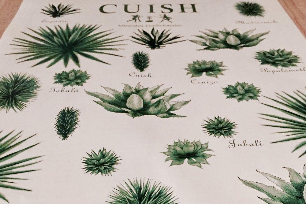 Cartel de tipología de agaves_Expresiones del Mezcal