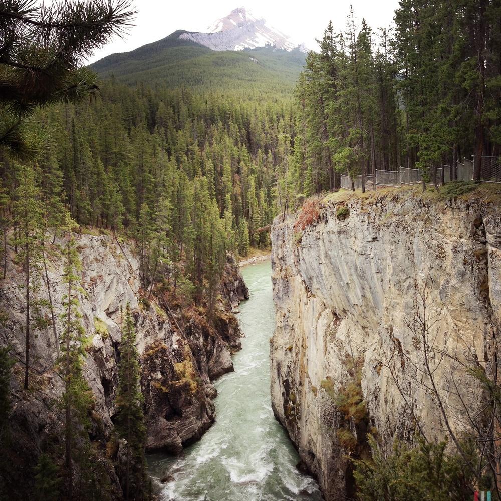 sunwapta canyon