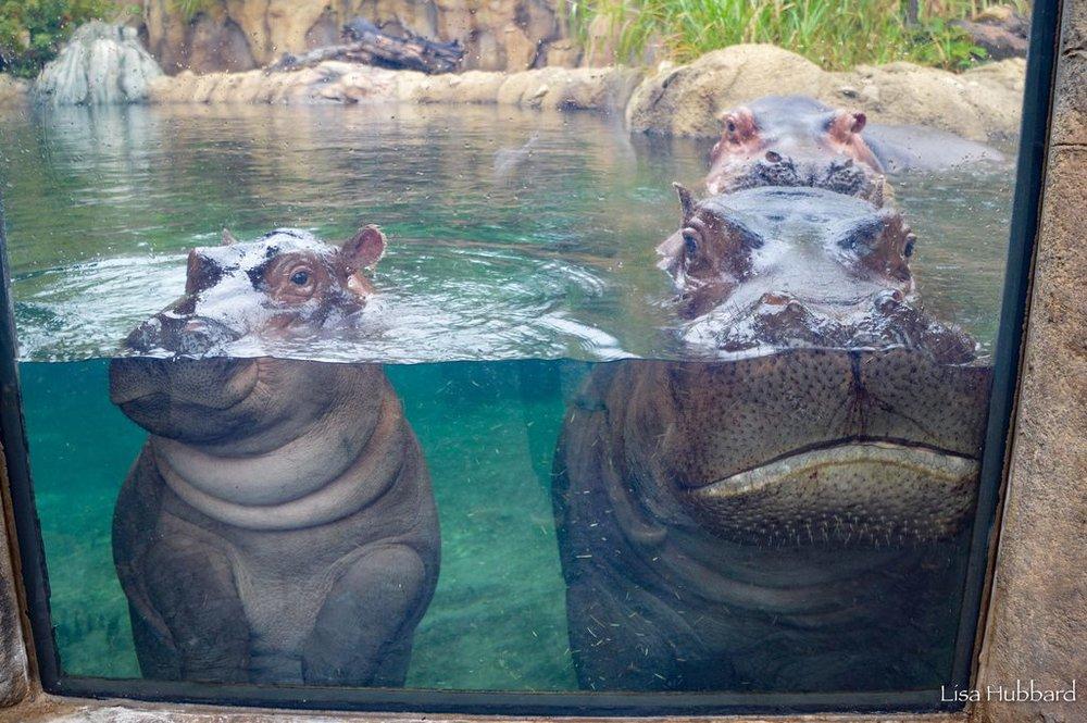 Photo courtesy of  The Cincinnati Zoo