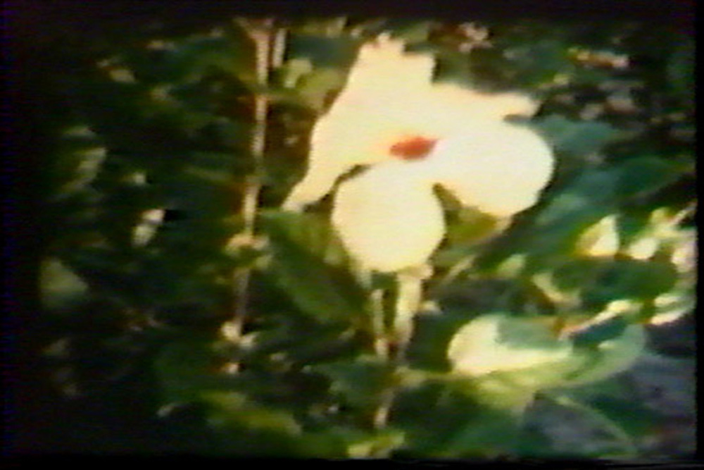 home (movies); hibiscus