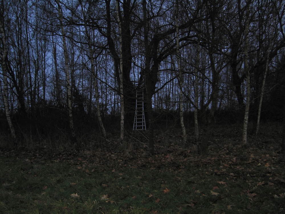 Untitled (family pictures); ladder
