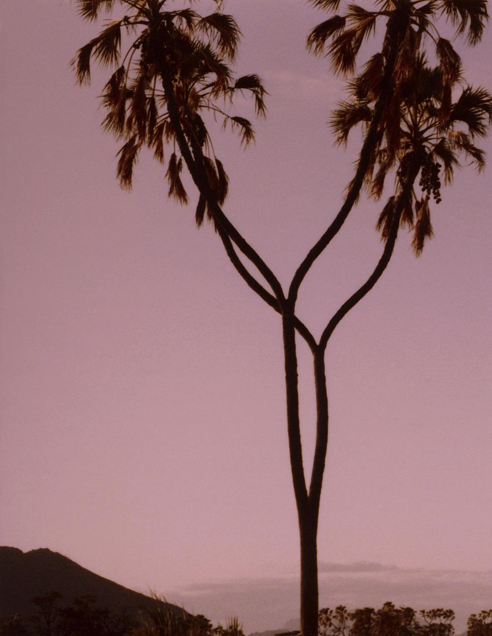 Coupled Palms