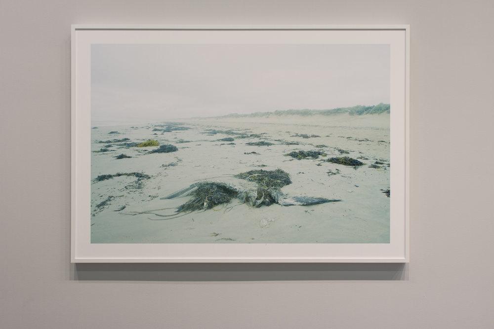 Blue Tides, Cormorant