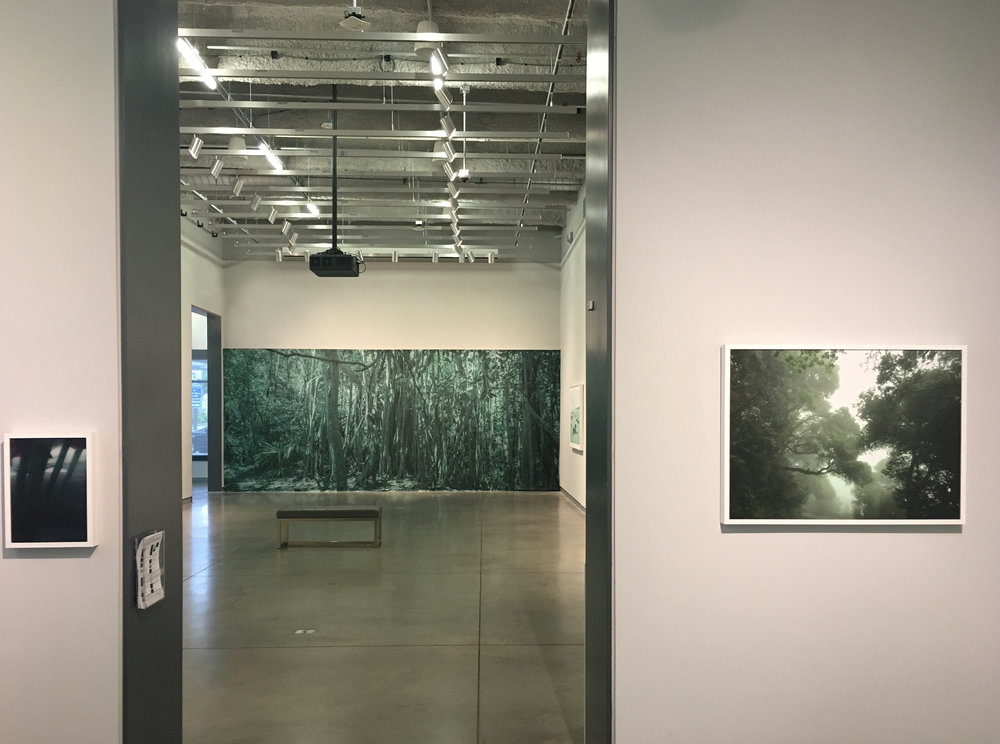 Paradise Wavering     Underwater Prairie   (left)   Green Daze   (right) Photographic Fabric Walls, Pigment Prints and Sound Installation  University Galleries 2017