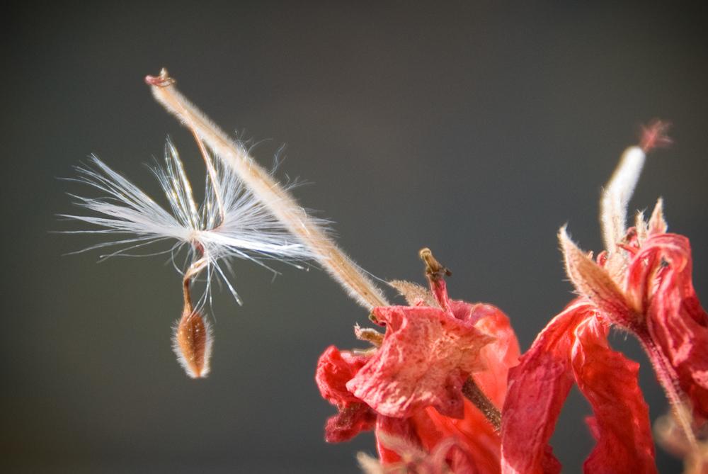 holy seed