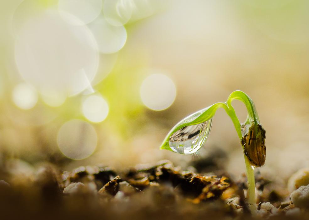 minuscule sprout