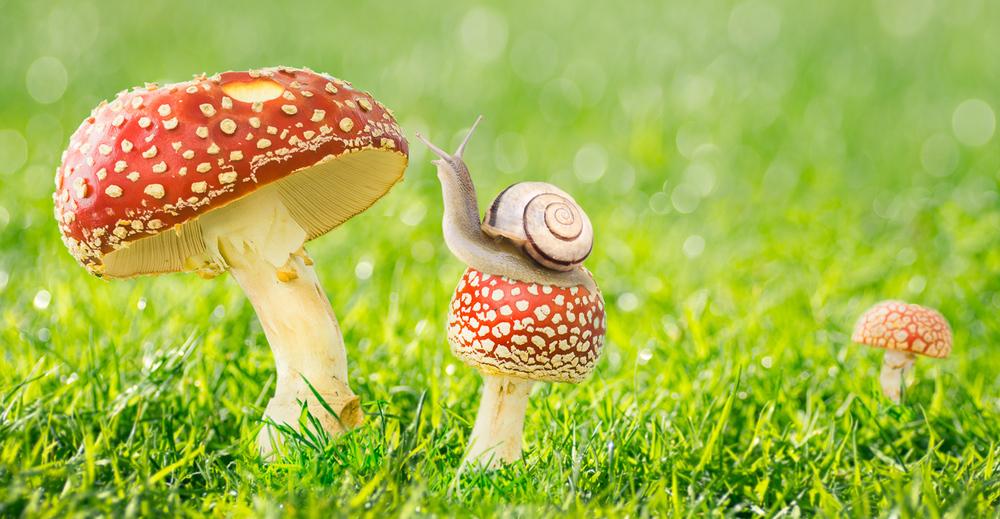 snail bravery