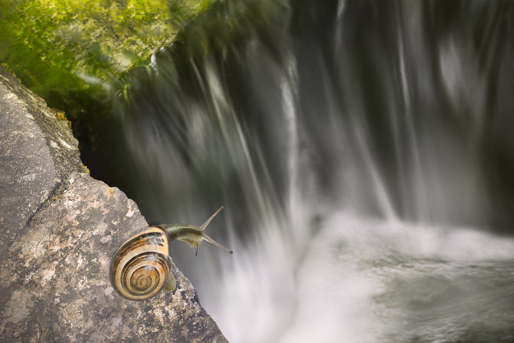 waterfall snail