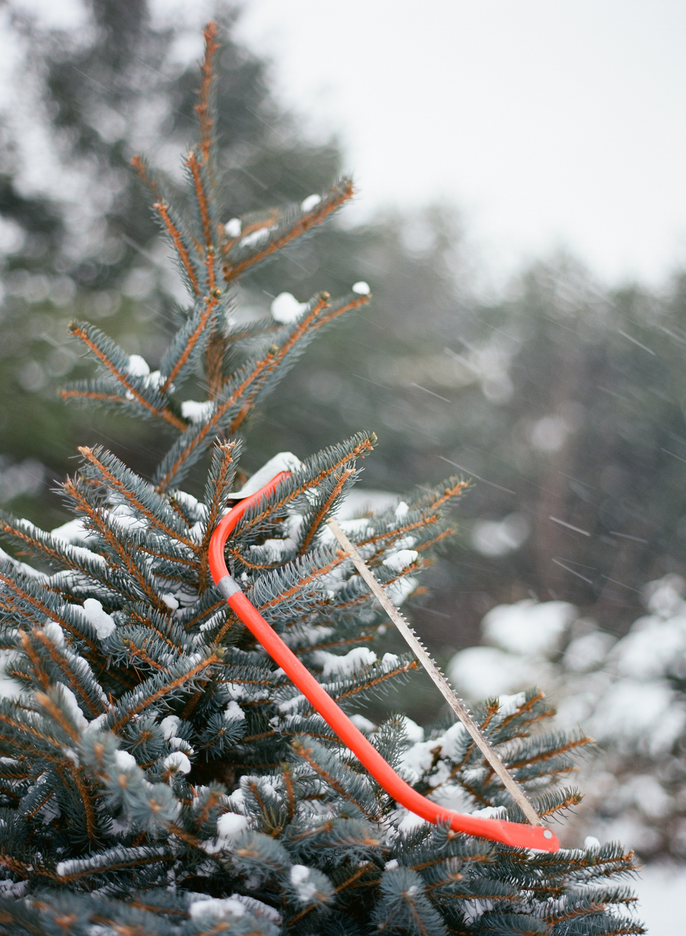 christmas-trees-wausau-wi-001