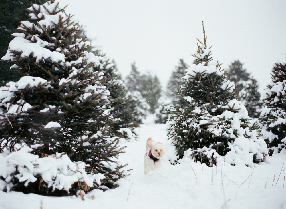 christmas-trees-wausau-wi-007