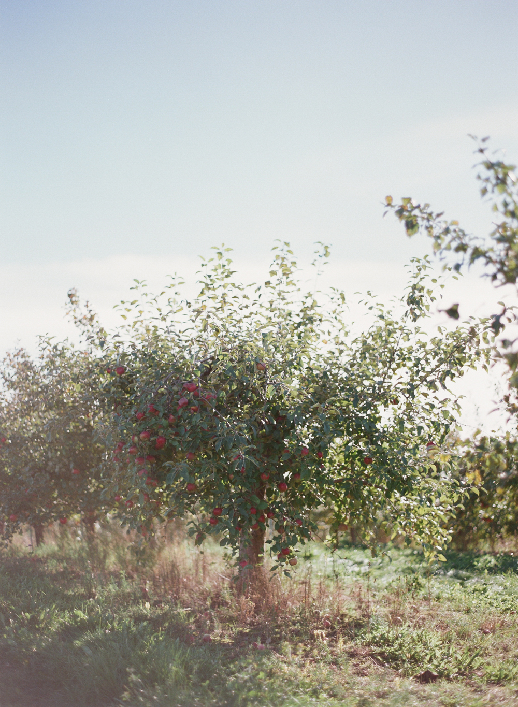 apple-picking-wausau-wi-001