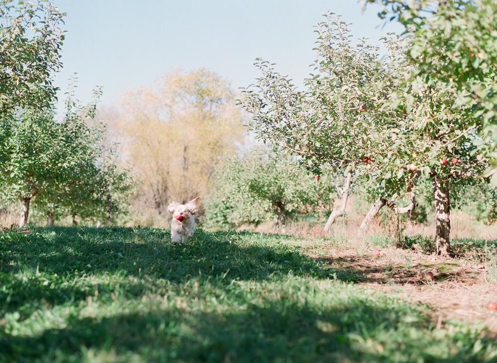 apple-picking-wausau-wi-002