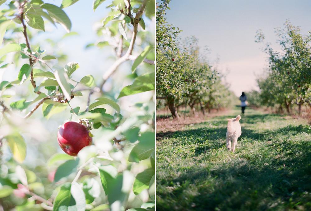 apple-picking-wausau-wi006
