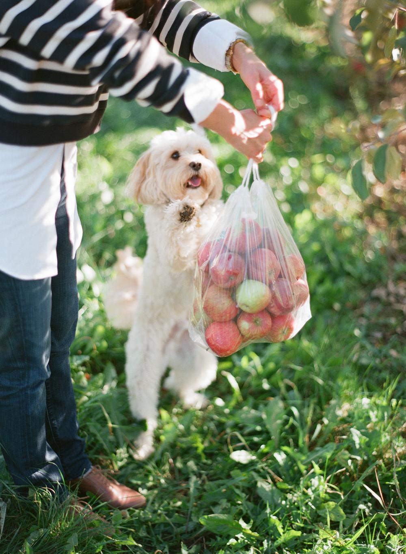 apple-picking-wausau-wi-009