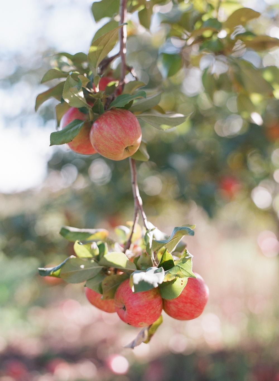 apple-picking-wausau-wi-014