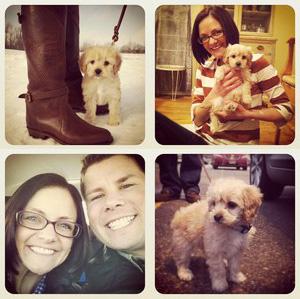 """Cavapoo Puppy"", ""Dog Photographer"", ""Cavapoo Puppy Photos"""