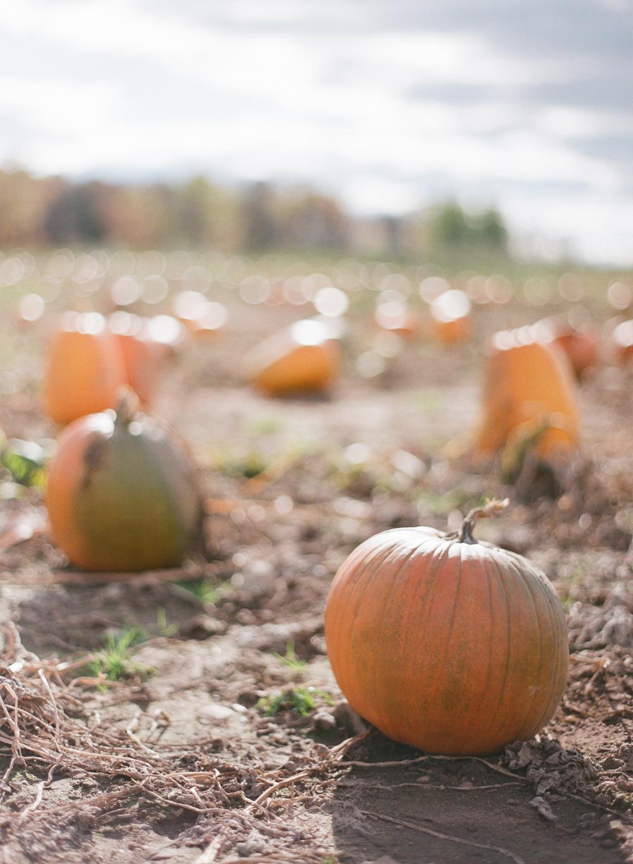 pumpkin-patch-wausau-wi-001