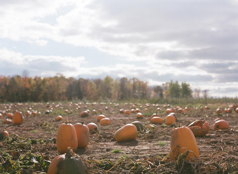 pumpkin-patch-wausau-wi-009