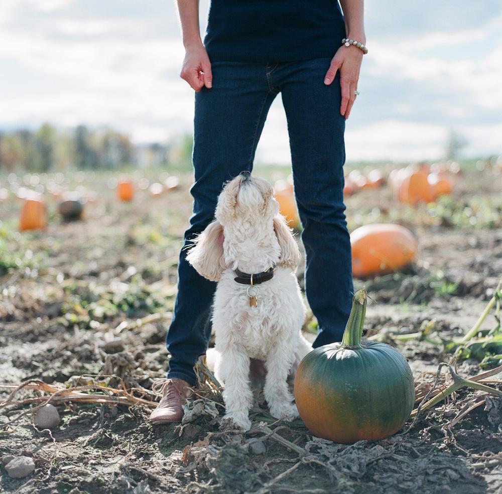 pumpkin-patch-wausau-wi-010