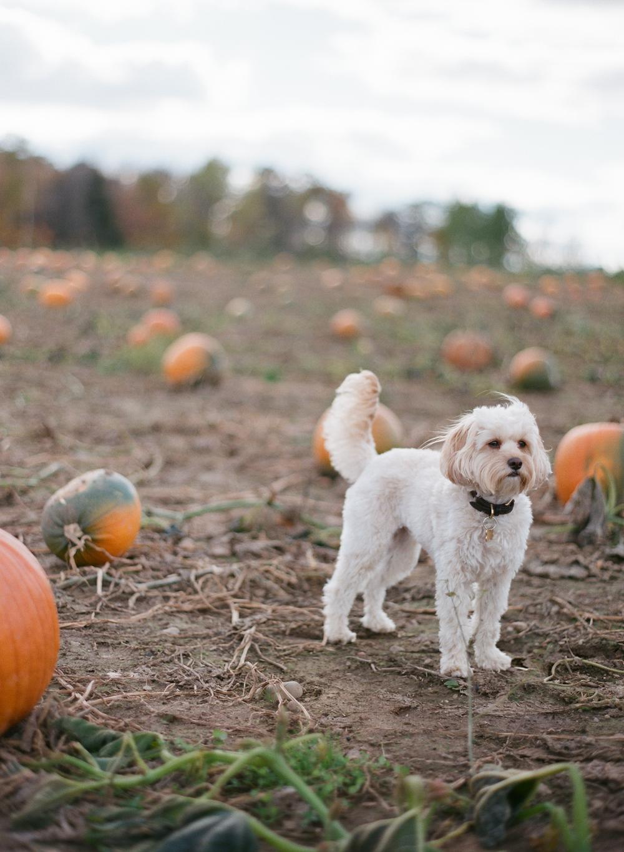 pumpkin-patch-wausau-wi-011