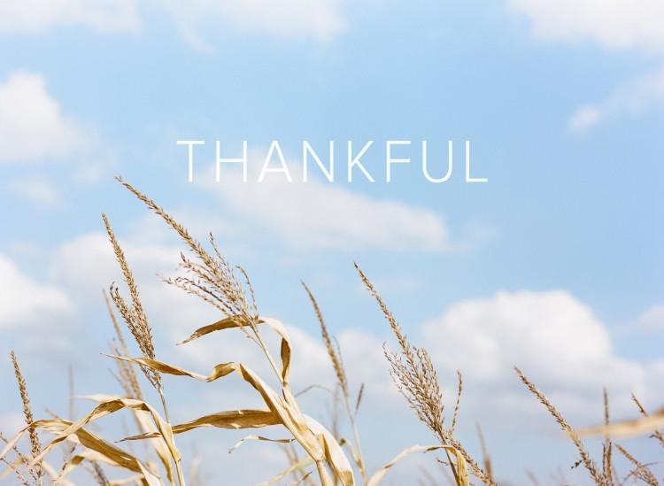 fall-thankful-thanksgiving