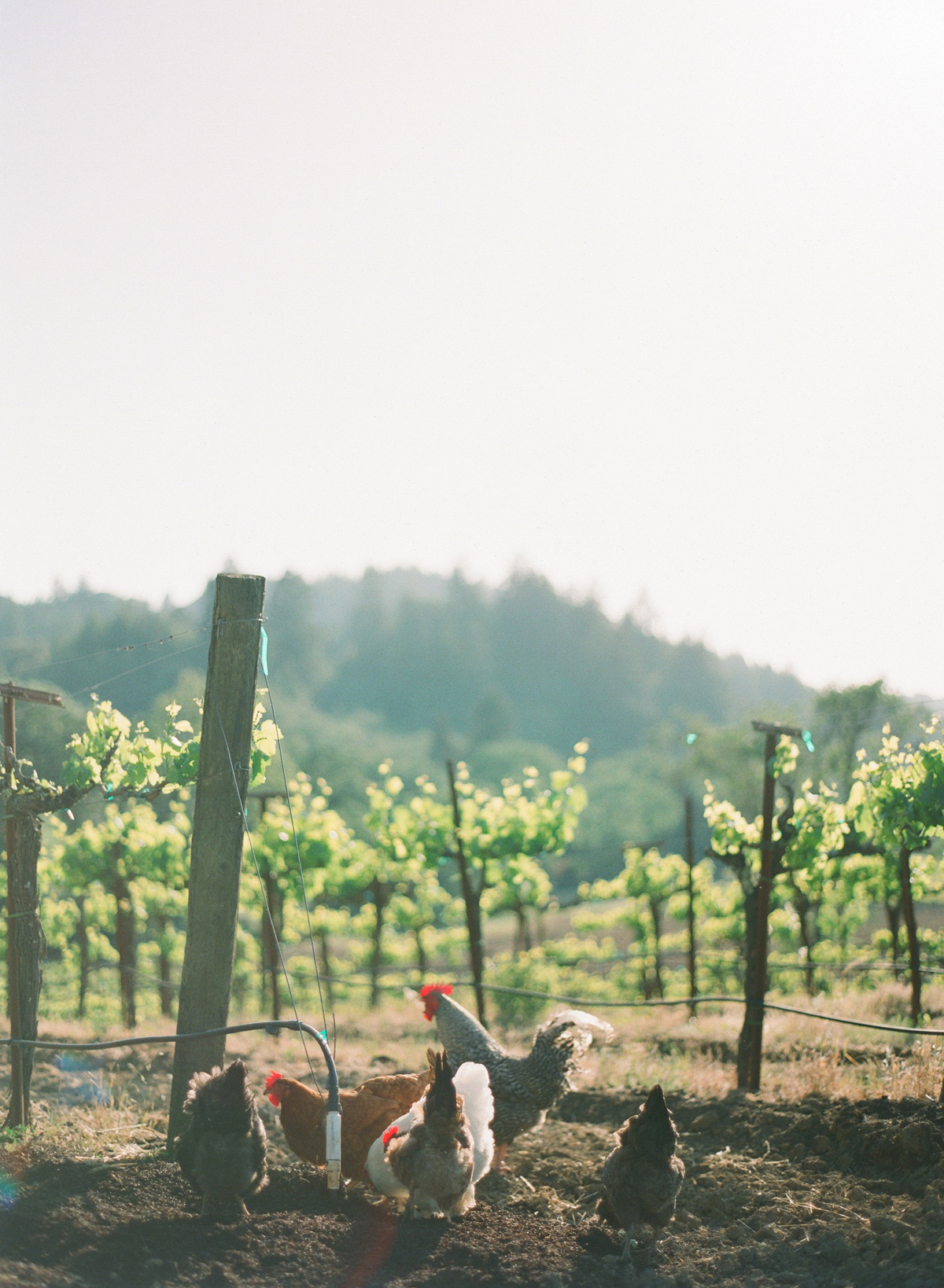 wine-country-photographers