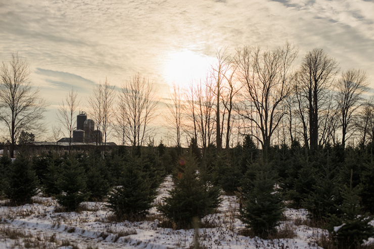 wausau-christmas-trees