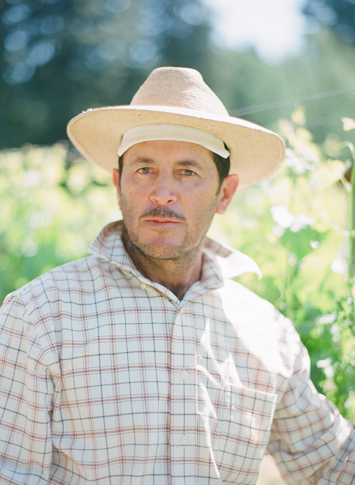 """sonoma california winemakers"""