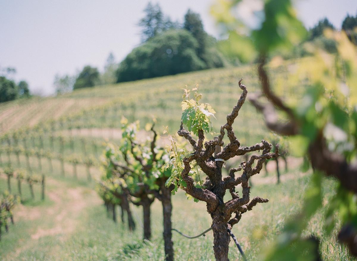 """california vineyards"""
