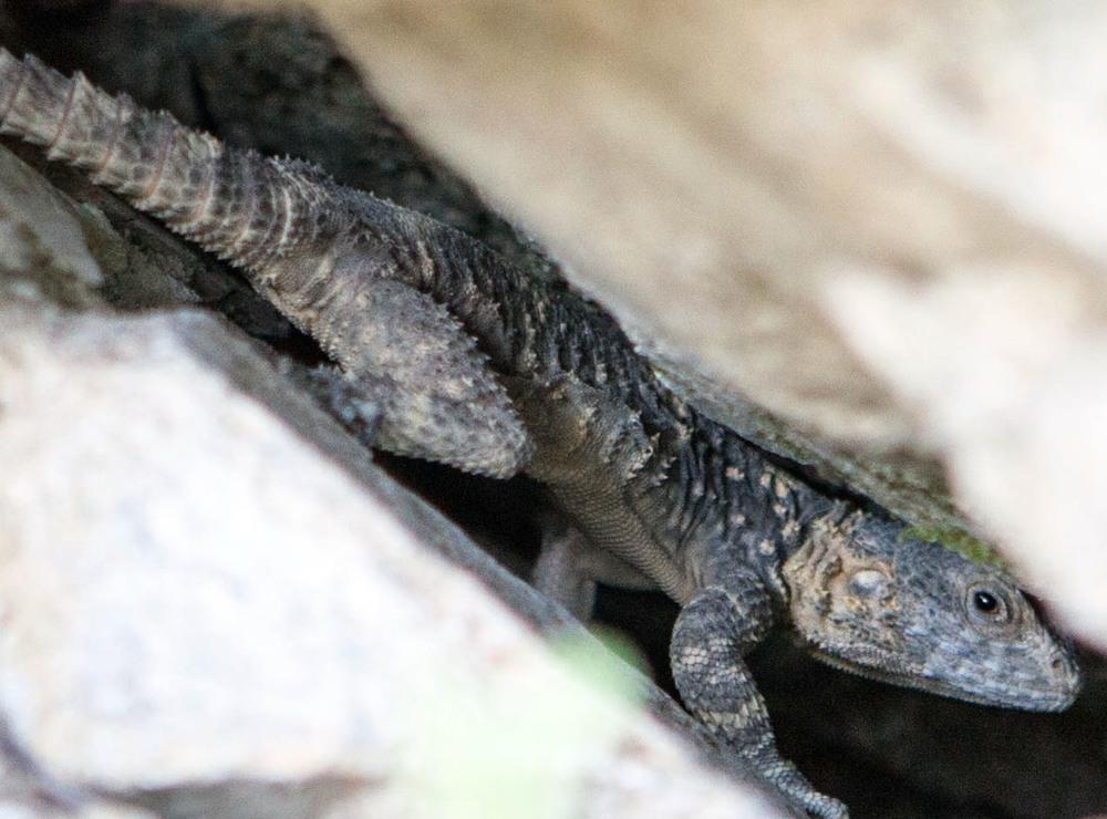 Discover Ikaria's wildlife