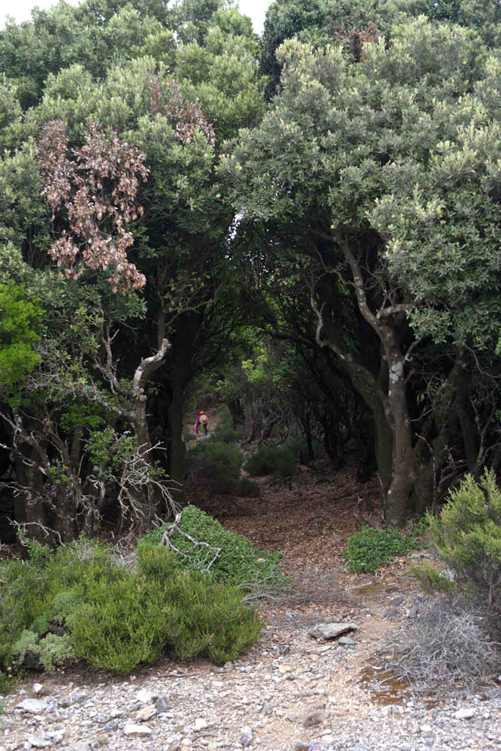 Ikaria's Protected Forest