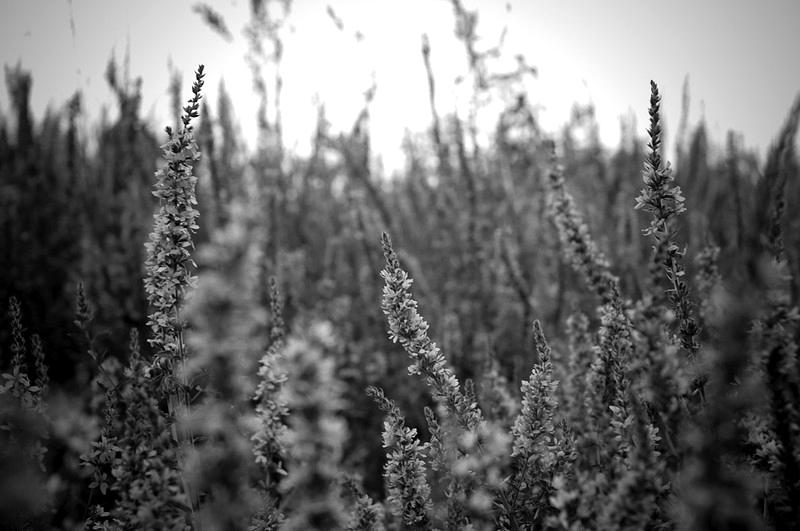 grasses_BW.jpg