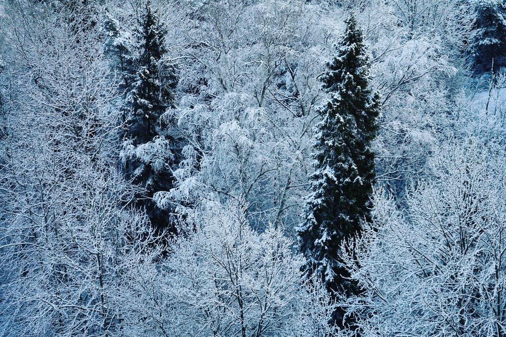 Snöiga träd.JPG