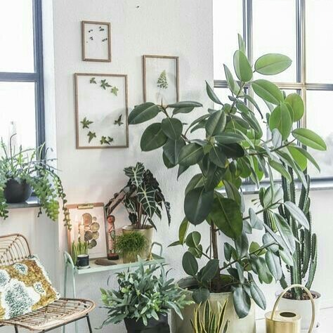 If only i didn't kill every plant I owned 😑 #housedreaming #pintrest #botanical