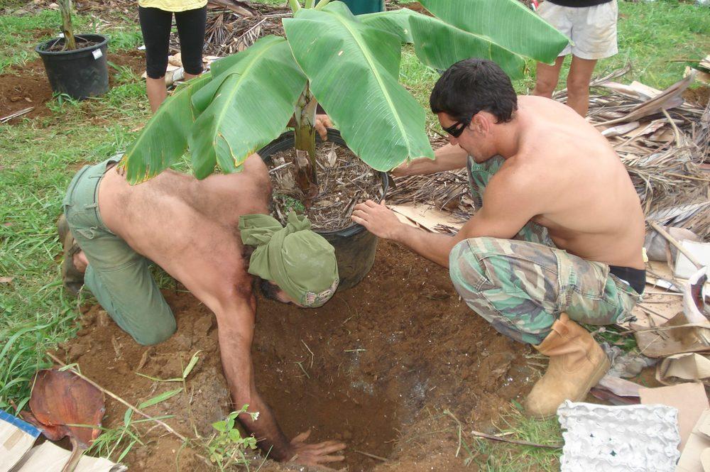 Barca Planting Banana Trees.jpg