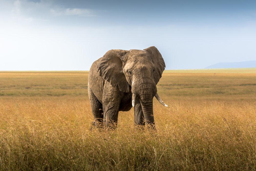 AFRICA-7-3.jpg