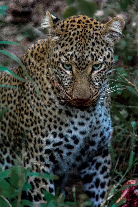 AFRICA-25.jpg