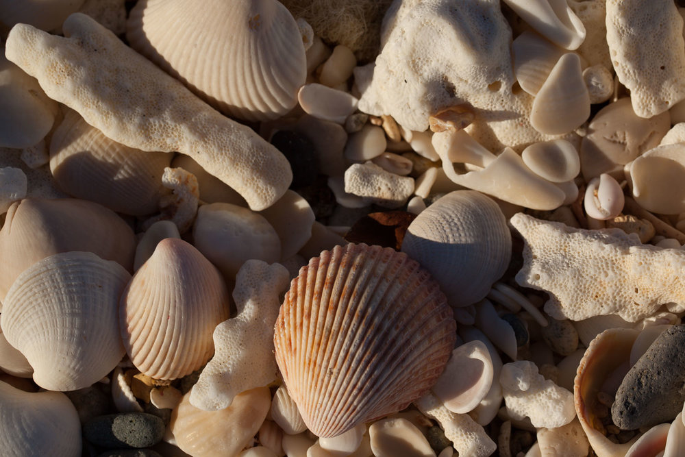 Playa Bonanza was pretty well covered with shells, bits of shells and bones of fish and birds.
