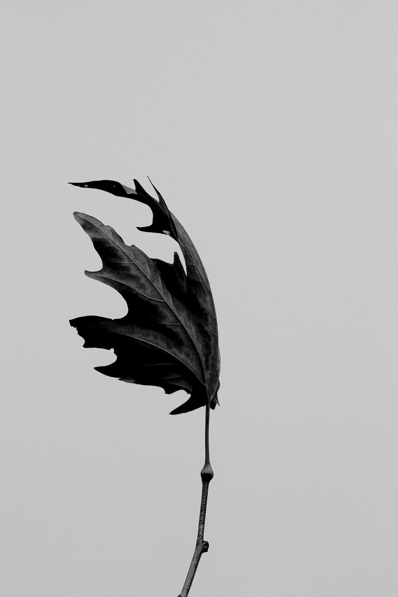nature-11.jpg