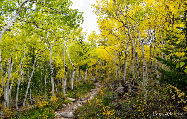 aspen+trail+dark.jpg