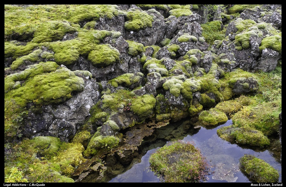 volcanic%2Blichen%2Band%2Bmoss-20146493.jpg