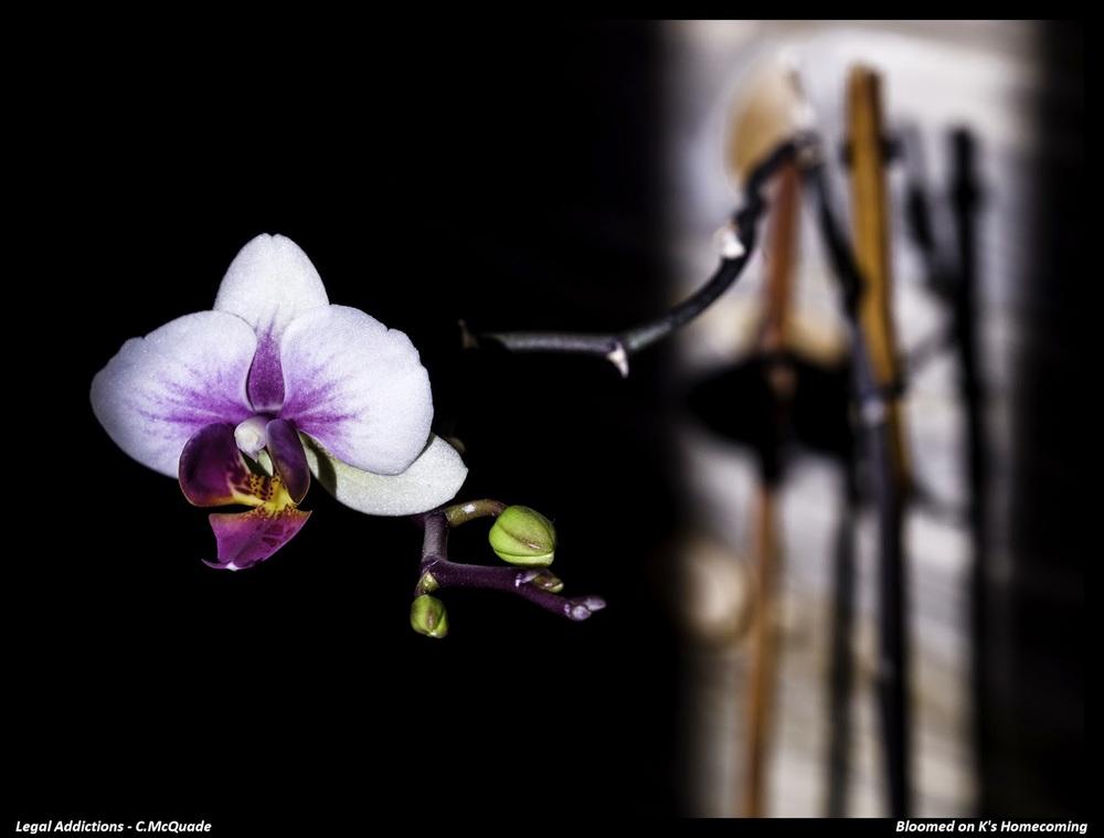 homecoming+bloom+for+k-.jpg