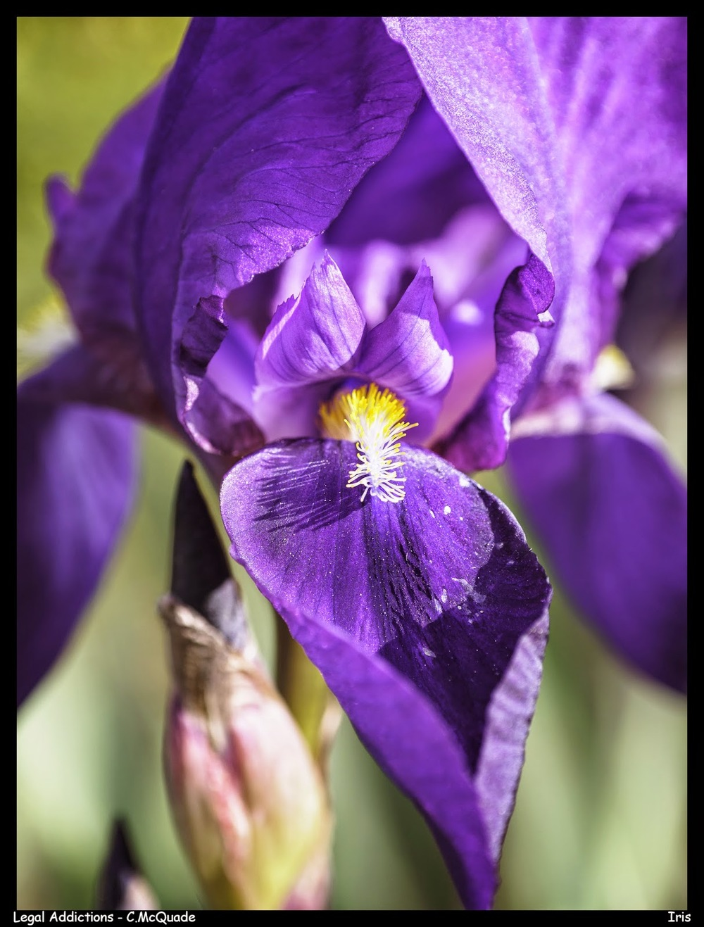 flower2-20142713.jpg