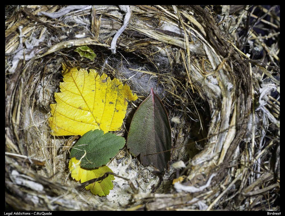 birdnest%2Bfall%2Bleaf%2Bcollection-20148511.jpg