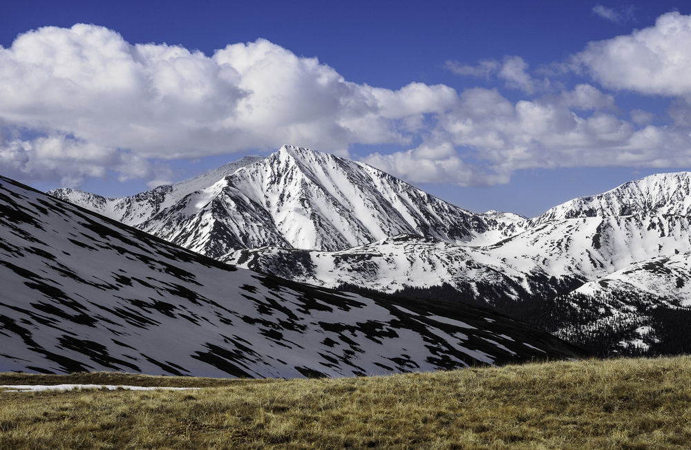 Torreys' - The Emperor and Tunning Fork looking great!