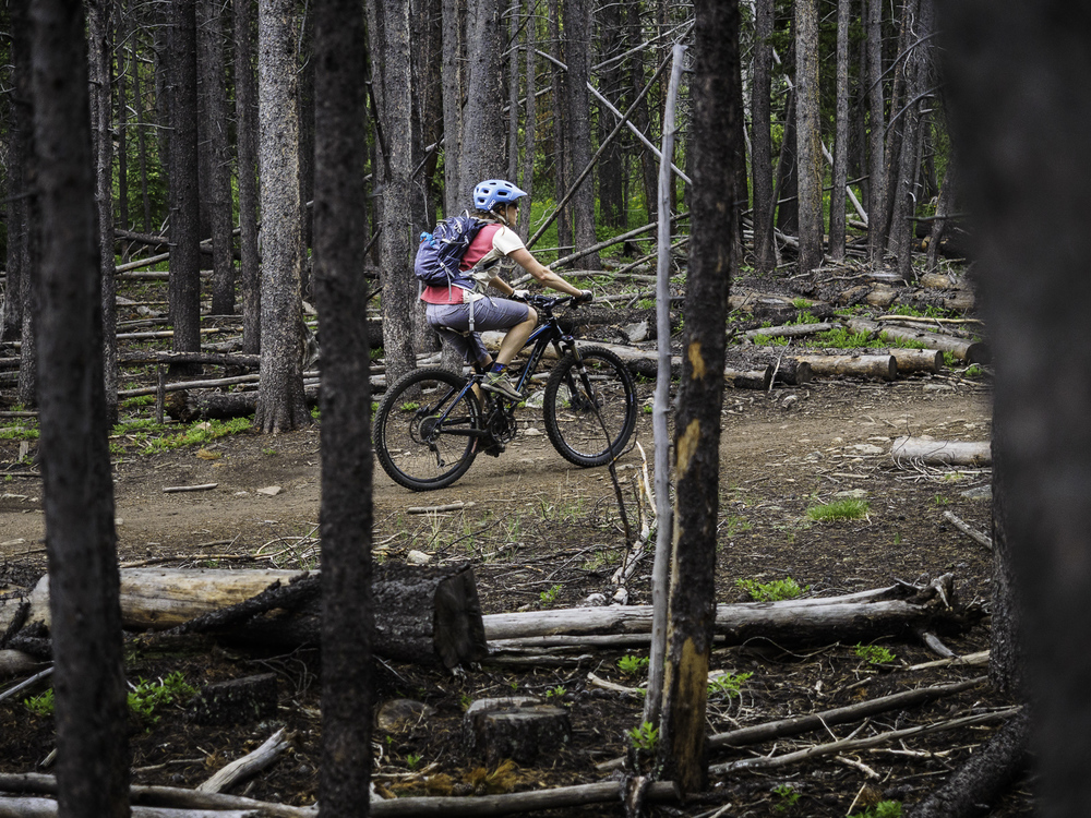 Dead Forrest - Peaks Trail