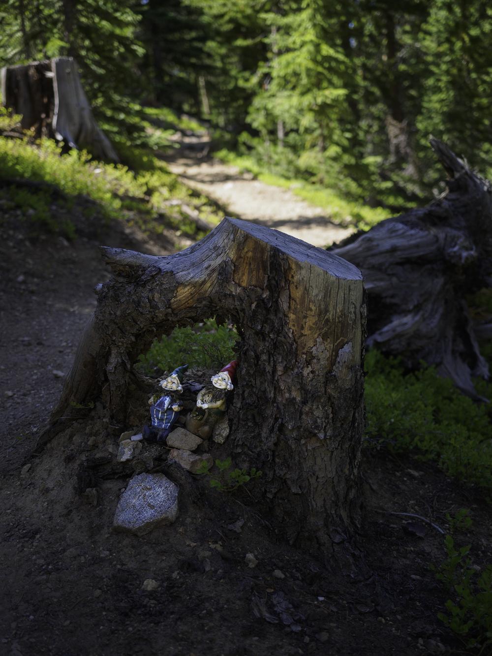 Trail Gnomes - Colorado Trail: Segment 6
