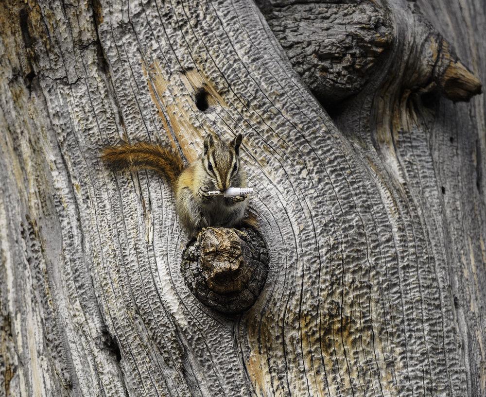 Tech Savvy Squirrel